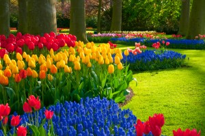 perennials, garden, gardening, landscaping, flowering plants, Loudoun county, Leesburg