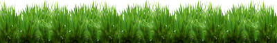 Protect and Recover Your Loudoun Lawn From Heavy Rain