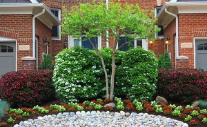 Landscaping, garden beds, rock beds, tree care