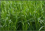 lawn mowing services ashburn